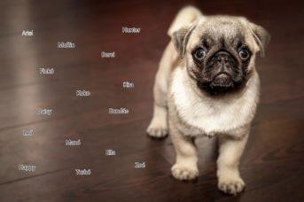 kiskutya nevek listája 343x228 - Kiskutya nevek listája, hogy könnyebb legyen a névválasztás!