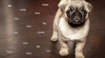 kiskutya nevek listája 360x201 - Kiskutya nevek listája, hogy könnyebb legyen a névválasztás!