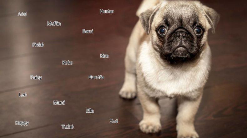 kiskutya nevek listája 790x442 - Kiskutya nevek listája, hogy könnyebb legyen a névválasztás!