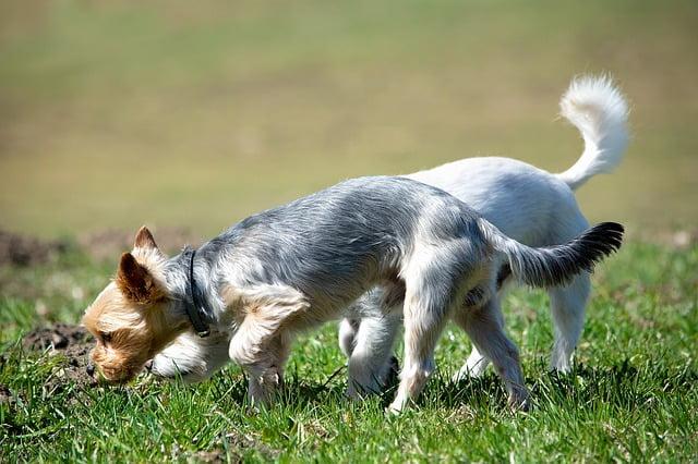 Miért kell hagynod hogy a kutyád szimatoljon séta közben - Miért kell hagynod, hogy a kutyád szimatoljon séta közben?