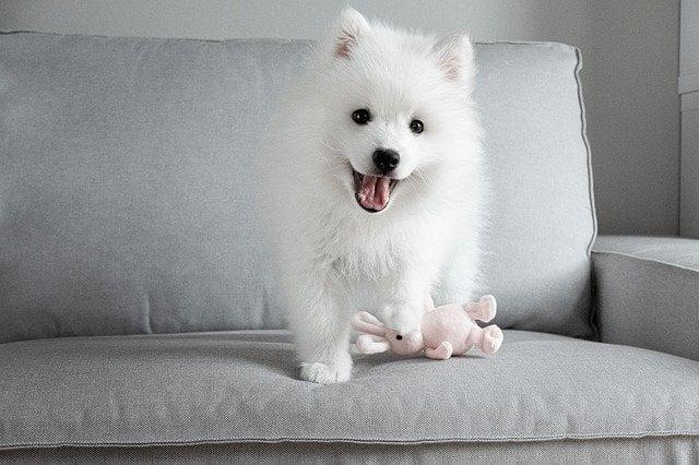 Egyszerűen betartható szabályok és korlátok felállítása - Mire számíthatsz az első 24 órában újdonsült kutyáddal?