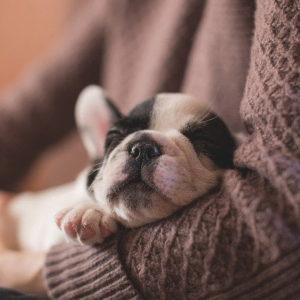 Mire számíthatsz az első 24 órában újdonsült kutyáddal 300x300 - Mire számíthatsz az első 24 órában újdonsült kutyáddal?