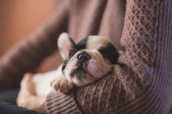 Mire számíthatsz az első 24 órában újdonsült kutyáddal 343x228 - Mire számíthatsz az első 24 órában újdonsült kutyáddal?