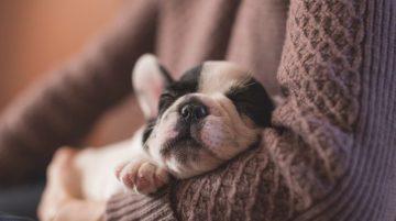 Mire számíthatsz az első 24 órában újdonsült kutyáddal 360x201 - Mire számíthatsz az első 24 órában újdonsült kutyáddal?
