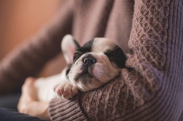 Mire számíthatsz az első 24 órában újdonsült kutyáddal - Mire számíthatsz az első 24 órában újdonsült kutyáddal?