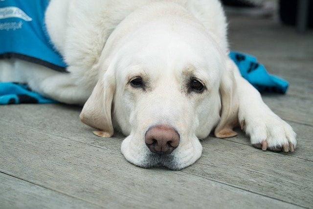 7 egyértelmű jele annak hogy kutyádnak azonnal egy állatorvosra van szüksége - 6 egyértelmű jel, hogy kutyádnak azonnal egy állatorvosra van szüksége!