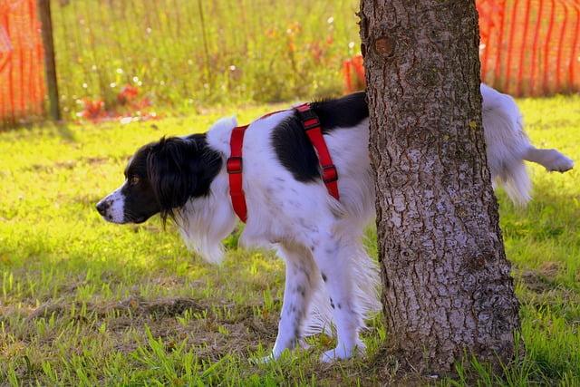 Vizelet problémák kutyáknál - 6 egyértelmű jel, hogy kutyádnak azonnal egy állatorvosra van szüksége!