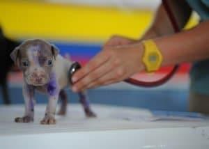 Hogyan válassz hatékonyan állatorvost kutyád számára 300x214 -