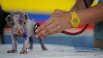 Hogyan válassz hatékonyan állatorvost kutyád számára 360x201 - Hogyan válaszd ki a megfelelő állatorvost kutyád számára?