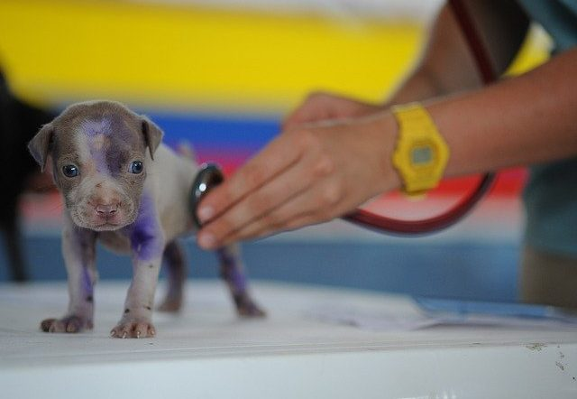 Hogyan válassz hatékonyan állatorvost kutyád számára 640x442 - Hogyan válaszd ki a megfelelő állatorvost kutyád számára?